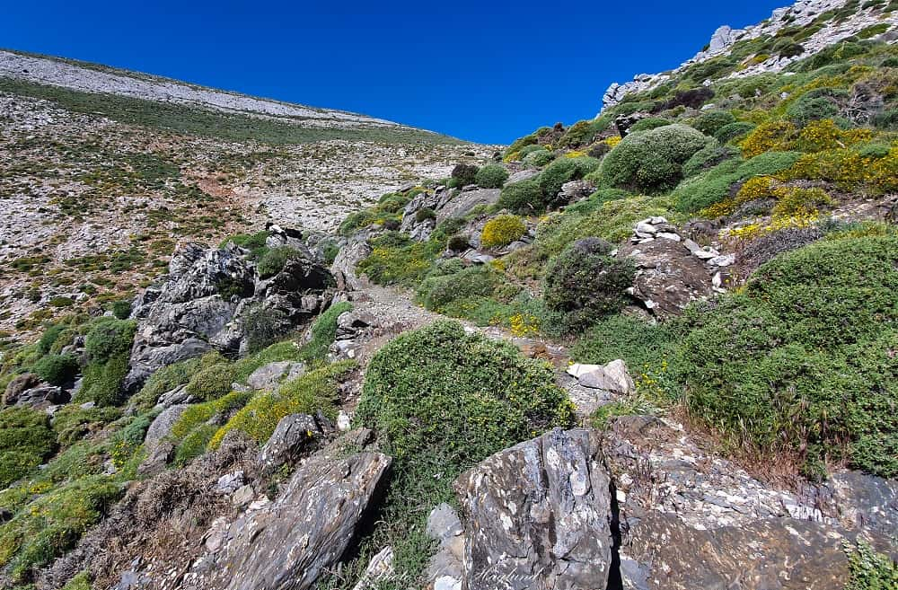 The last section of the hike to La Maroma from canillas de Aceituno