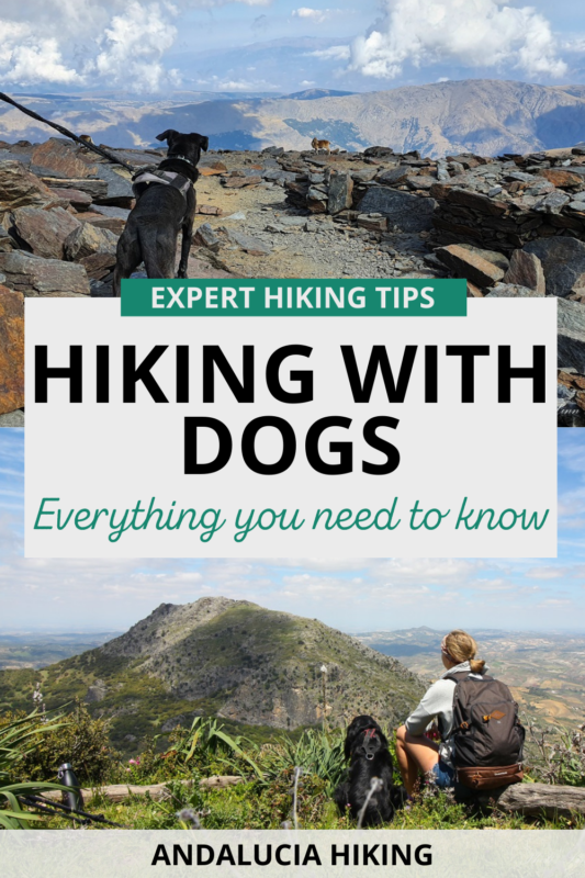 If you're planning to take your dog hiking, here are the top tips about hiking with dogs that you will need to know. Expert dog hiking tips to make sure you don't make the most common mistakes and can enjoy a comfortable walk in the outdoors.