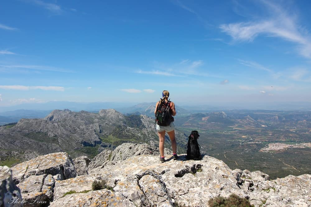 hiking for dogs